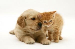 ¿ Perros o Gatos ?